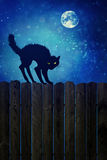 Czarny kot na drewna ogrodzeniu przy nocą Fotografia Royalty Free
