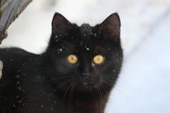 Czarny kot na śniegu Fotografia Stock
