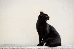Czarny kot Na Ozdobnej ławce obraz stock