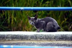 Czarny kot na raźnym stanie Fotografia Royalty Free