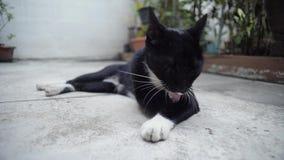 Czarny kot ono czyści na betonowej podłodze zdjęcie wideo