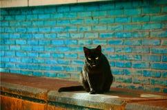 Czarny kot patrzeje ciebie obrazy stock