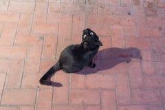 Czarny kot patrzeje ciebie na ulicie Fotografia Royalty Free