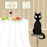 Czarny kot patrzeje dla jedzenia Obrazy Stock
