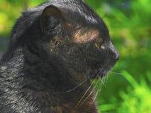 Czarny kot patrzeje gdzieś w odległości obrazy royalty free