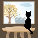 Czarny kot przy okno Fotografia Stock