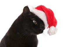 Czarny kot Santa - śliczni boże narodzenia koty, bożego narodzenia zwierzę domowe z Santa C Zdjęcie Royalty Free