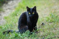 Czarny kot siedzi outside w trawie Fotografia Royalty Free