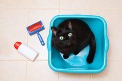 Czarny kot siedzi w błękitnym washtub W łazience na widok obraz stock