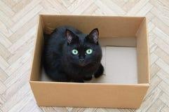 Czarny kot siedzi w kartonie zdjęcie royalty free