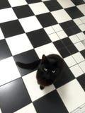Czarny kot sprawdza out nowe płytki w łazience obraz royalty free
