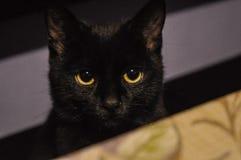 Czarny kot - właśnie piękny zdjęcie royalty free