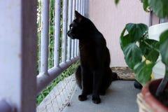 Czarny kot w balkonowej klauzurze, czujny profil zdjęcie royalty free