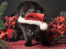 Czarny kot w Bożenarodzeniowej nakrętce Obraz Royalty Free