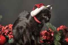 Czarny kot w Bożenarodzeniowej nakrętce Zdjęcie Stock