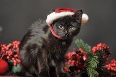 Czarny kot w Bożenarodzeniowej nakrętce Fotografia Royalty Free