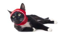 Czarny kot w kapeluszu Zdjęcia Royalty Free