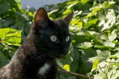 Czarny kot w ogródzie Fotografia Royalty Free