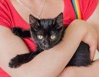 Czarny kot w ona ręki Zdjęcie Stock