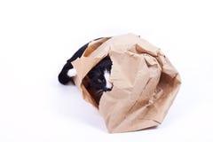 Czarny kot w papierowej torbie Obrazy Royalty Free