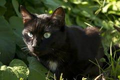 Czarny kot w Pogodnym ogródzie Zdjęcie Royalty Free