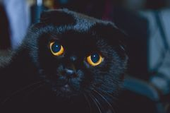 Czarny kot w pokoju Obraz Royalty Free
