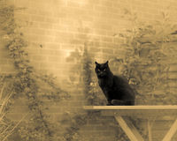 Czarny kot W sen ogródzie Obraz Stock