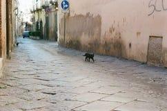 Czarny kot w Włoskiej starej grodzkiej ulicie Zdjęcia Royalty Free