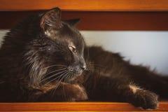 Czarny kot wokoło spać fotografia stock