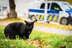 Czarny kot z żółtymi oczami chodzi na trawie, żółci jesień liście na tle zdjęcie royalty free