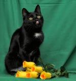 Czarny kot z żółtymi różami Fotografia Stock