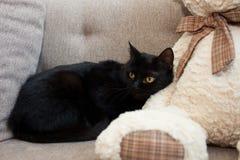 Czarny kot z kolorów żółtych oczami w nowym domu patrzeje daleko od Umysłowi i emocjonalni problemy koty obraz stock