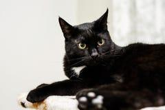 Czarny kot z kolorów żółtych oczami kłama w jego miejscu przy domem Fotografia Stock