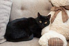 czarny kot z kolorem żółtym ono przygląda się w nowym domu Umysłowi i emocjonalni problemy koty zdjęcia stock