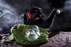 Czarny kot z Krystaliczną czaszką Obraz Stock