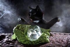 Czarny kot z Krystaliczną czaszką Zdjęcie Royalty Free