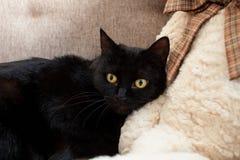 Czarny kot z przelękłymi kolorów żółtych oczami patrzeje daleko od Umysłowi i emocjonalni problemy koty fotografia royalty free