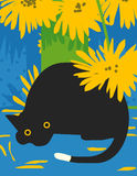 Czarny kot zaskakujący Zdjęcia Royalty Free