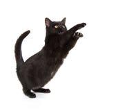 czarny kota bawić się zdjęcia royalty free