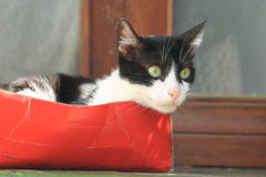 czarny kota biel Obrazy Royalty Free
