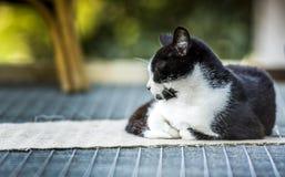 czarny kota dosypianie Fotografia Royalty Free