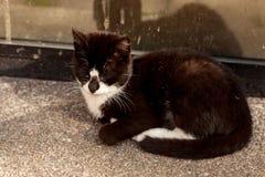 czarny kota dosypianie Zdjęcie Stock