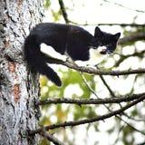 czarny kota drzewo Obraz Stock