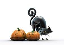 czarny kota Halloween bania Zdjęcie Royalty Free