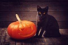czarny kota Halloween bania obraz royalty free