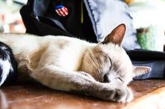 (1) 2 czarny kota koloru halftone kiciuni wersi biel Fotografia Stock