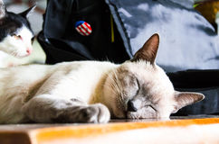(1) 2 czarny kota koloru halftone kiciuni wersi biel Obrazy Royalty Free