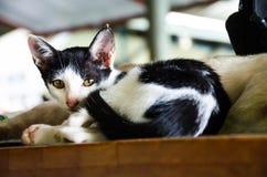 (1) 2 czarny kota koloru halftone kiciuni wersi biel Fotografia Royalty Free