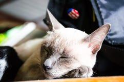 (1) 2 czarny kota koloru halftone kiciuni wersi biel Zdjęcie Royalty Free