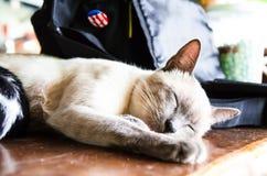 (1) 2 czarny kota koloru halftone kiciuni wersi biel Zdjęcia Royalty Free